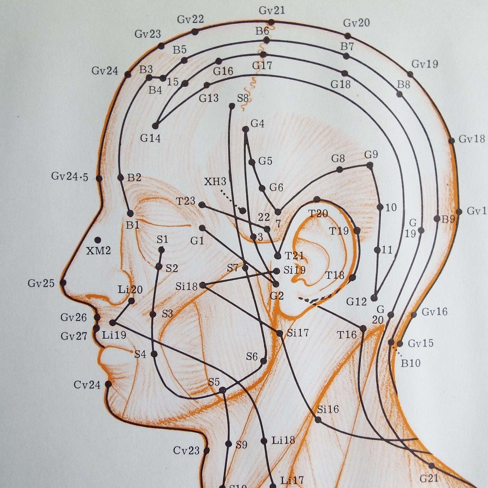 Acupoints head